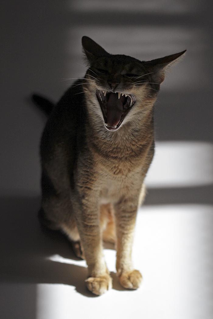 [猫的]Sing a Song_e0090124_21410087.jpg