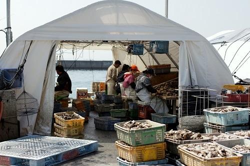 *室津漁港にいきました*_b0328557_19063500.jpg
