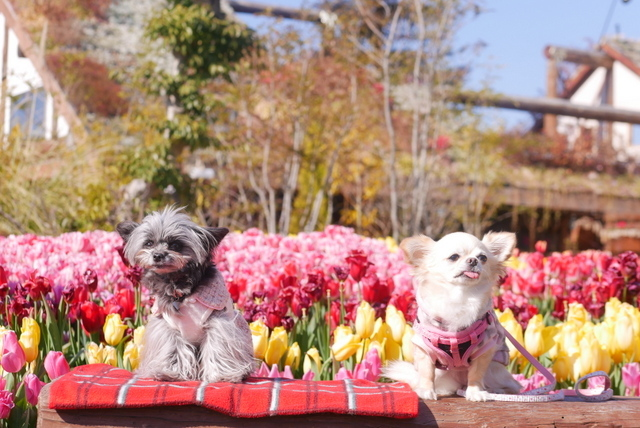 うめきたガーデン~花にかこまれて~_b0358575_05142675.jpg
