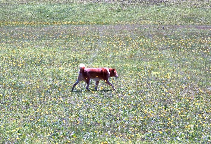 2010年1月と2012年8月の老犬ゲン_c0182775_12503346.jpg