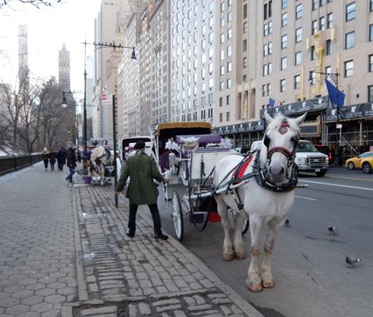 NYのセントラルパーク最南端59丁目沿いをお散歩_b0007805_1281348.jpg