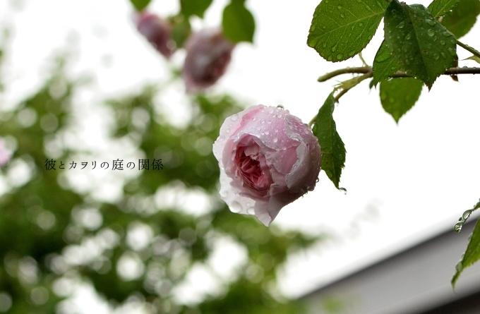 c0365716_17242509.jpg