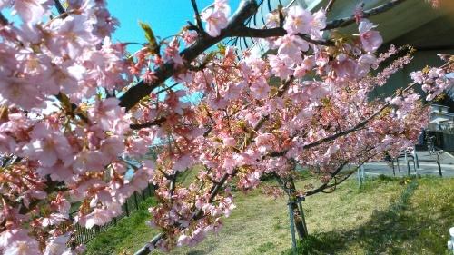 花も花粉も...春爛漫_b0137932_16143068.jpg