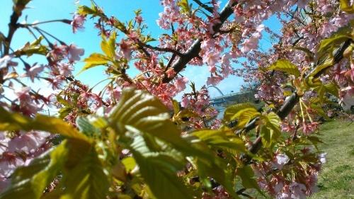 花も花粉も...春爛漫_b0137932_16181968.jpg