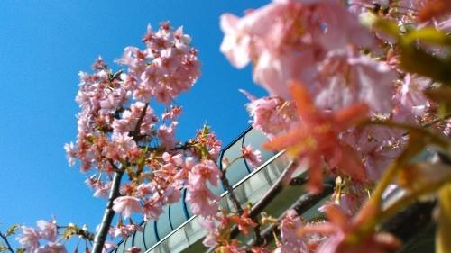 花も花粉も...春爛漫_b0137932_16185704.jpg