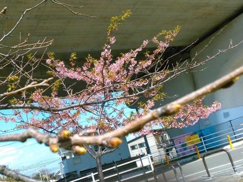 花も花粉も...春爛漫_b0137932_16194850.jpg