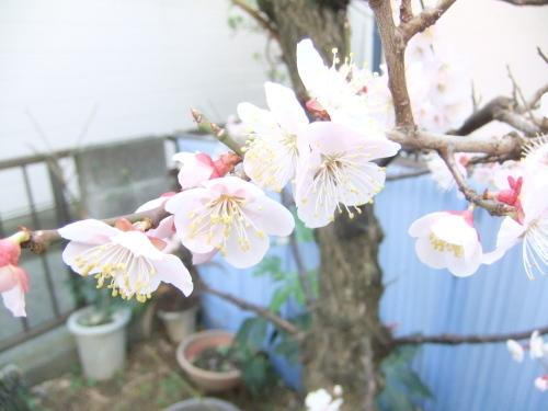 花も花粉も...春爛漫_b0137932_16201993.jpg