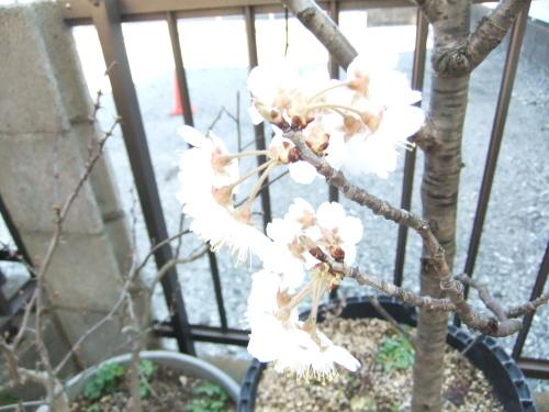 花も花粉も...春爛漫_b0137932_16205303.jpg