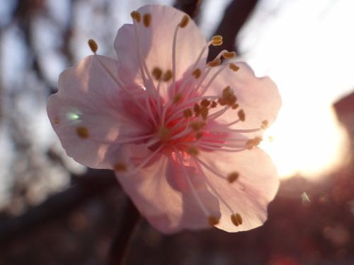 花咲く木の下には_e0240147_21062027.jpg