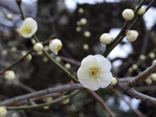 花咲く木の下には_e0240147_21162325.jpg