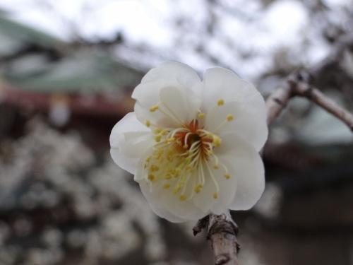 花咲く木の下には_e0240147_21164194.jpg