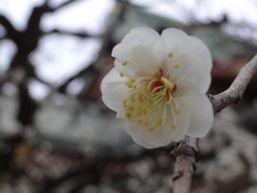 花咲く木の下には_e0240147_21164608.jpg