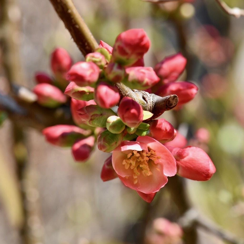 春が来た01_f0099102_17021023.jpg