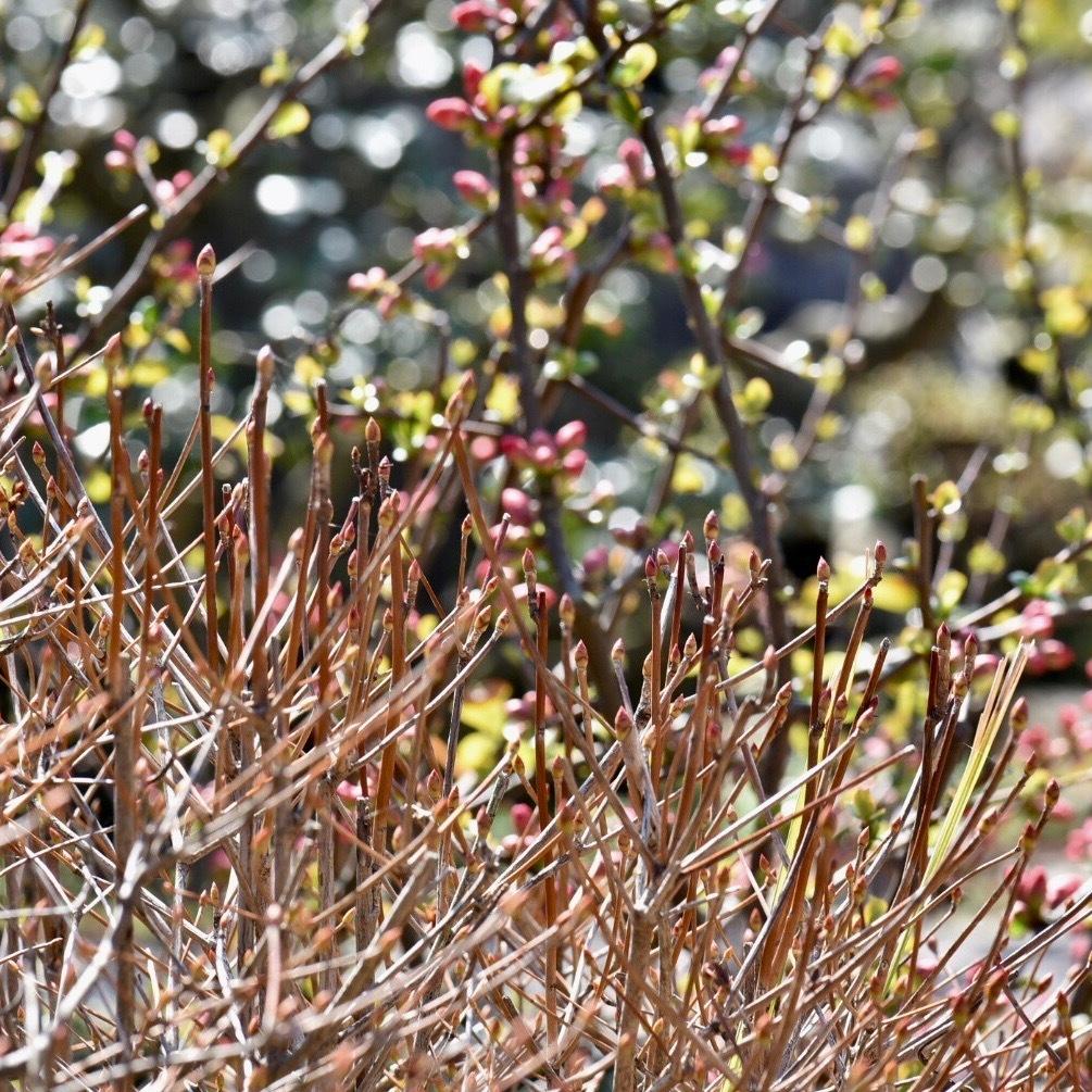 春が来た01_f0099102_17022243.jpg