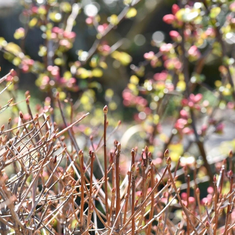 春が来た01_f0099102_17023684.jpg