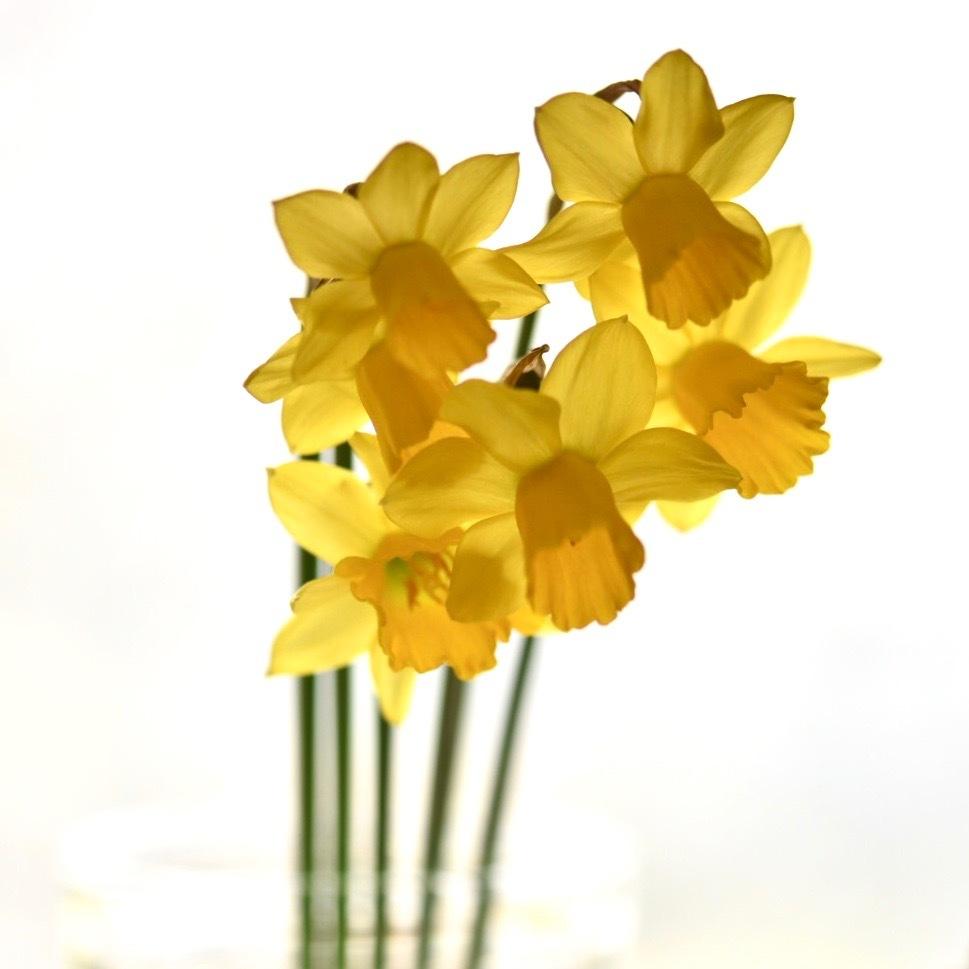 春が来た01_f0099102_17030843.jpg