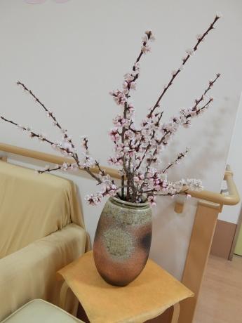 春のお花_d0227518_12214179.jpg
