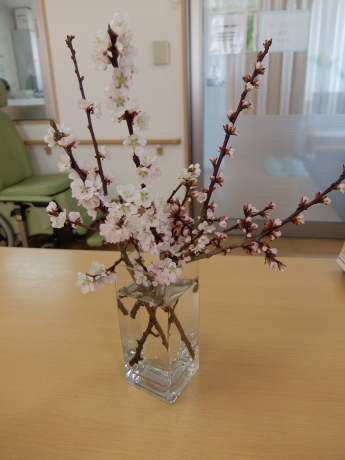 春のお花_d0227518_12240041.jpg