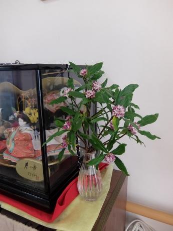 春のお花_d0227518_12245644.jpg