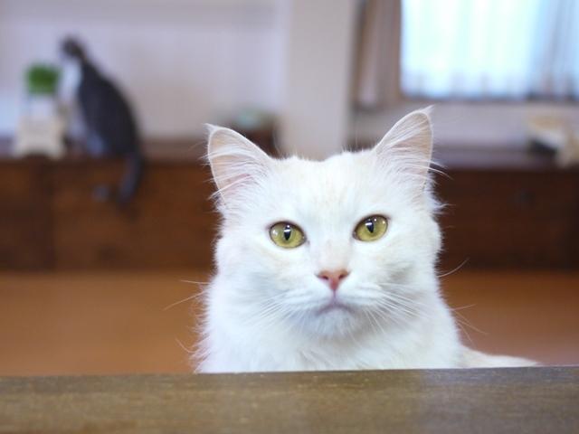 猫のお留守番 天ちゃん麦くん茶くん編。_a0143140_21361420.jpg