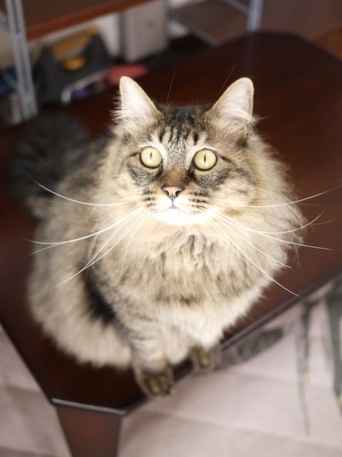 猫のお留守番 諭吉くん編。_a0143140_22505006.jpg