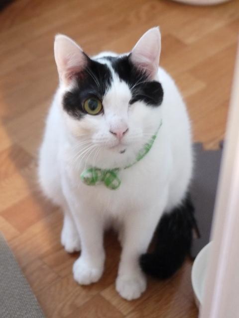 猫のお留守番 もぐくん編。_a0143140_22571987.jpg