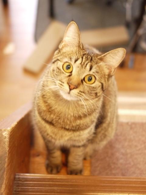 猫のお留守番 ゆきちゃん編。_a0143140_23021540.jpg