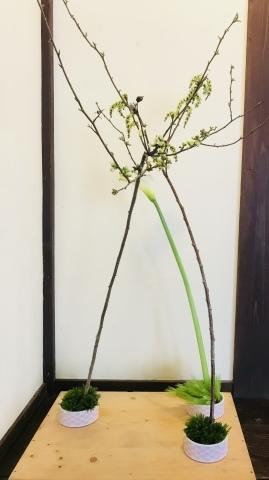 今週のお花_a0080074_18090715.jpeg