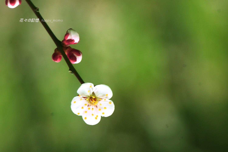 春の序曲_c0357781_20522243.jpg
