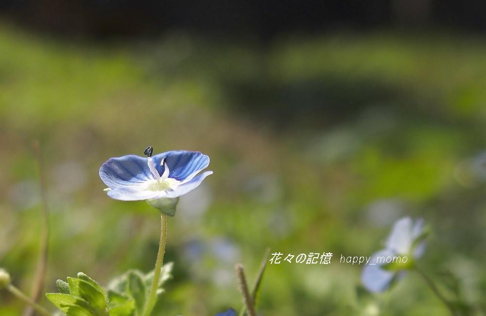春の序曲_c0357781_20532796.jpg