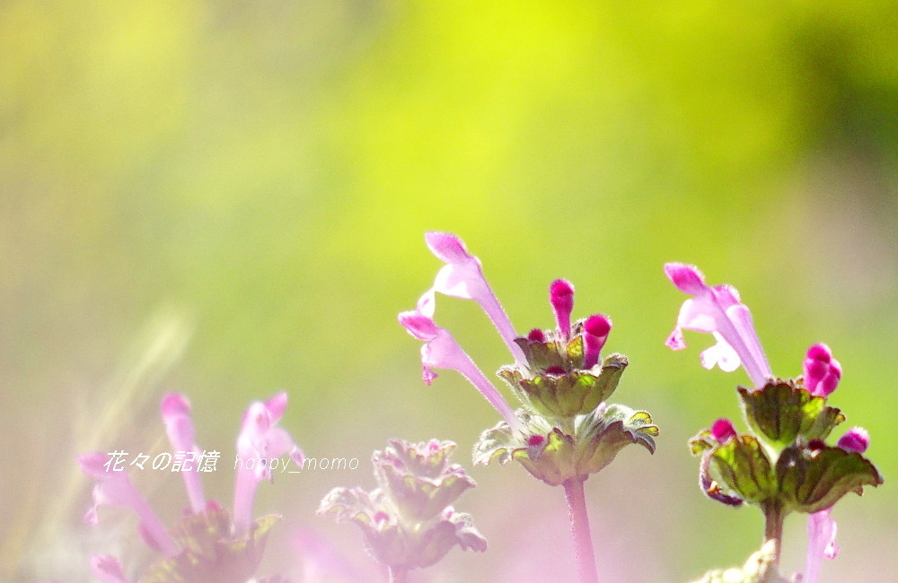 春の序曲_c0357781_20534317.jpg