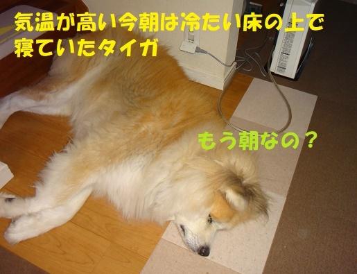 f0121712_23110074.jpg