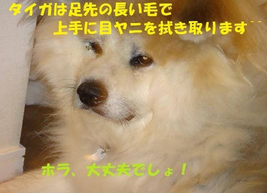 f0121712_23112600.jpg