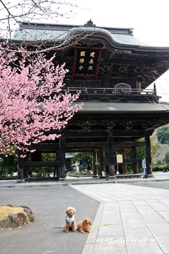 第24回マザーウルフ遠足 鎌倉天園レポート_e0191026_18544718.jpg