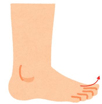 足がつりやすい人は副腎と◯臓を整えましょう 〜ある日の施術より〜_e0073240_16200606.jpg