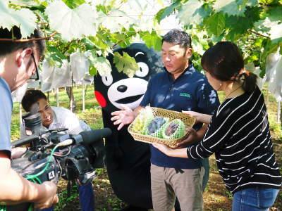 熊本ぶどう 社方園 芽吹き2020 前編:匠の芽キズをつける作業で今年も良い芽が芽吹きました!_a0254656_18530819.jpg
