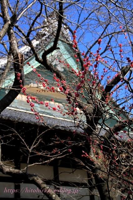 鎌倉散歩 宝戒寺と鎌倉ランチ&カフェ_f0374092_23314833.jpg