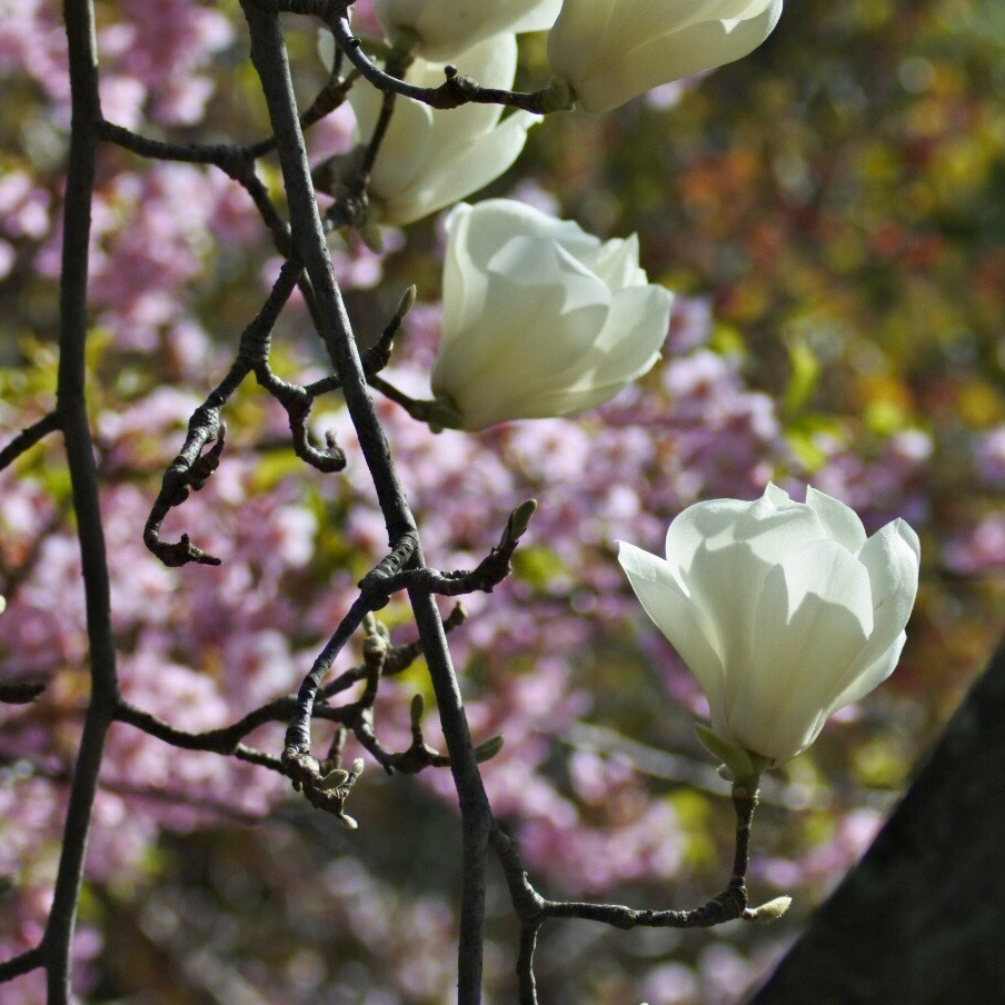 春が来た02_f0099102_20312944.jpg