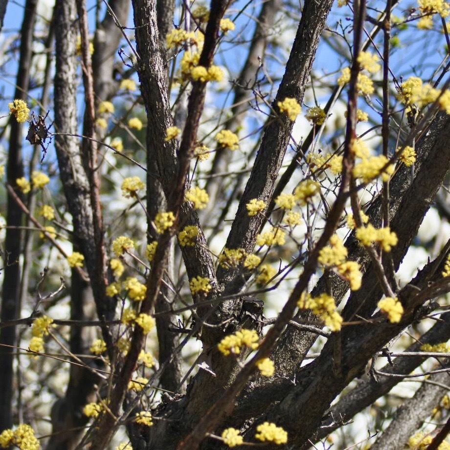 春が来た02_f0099102_20320973.jpg