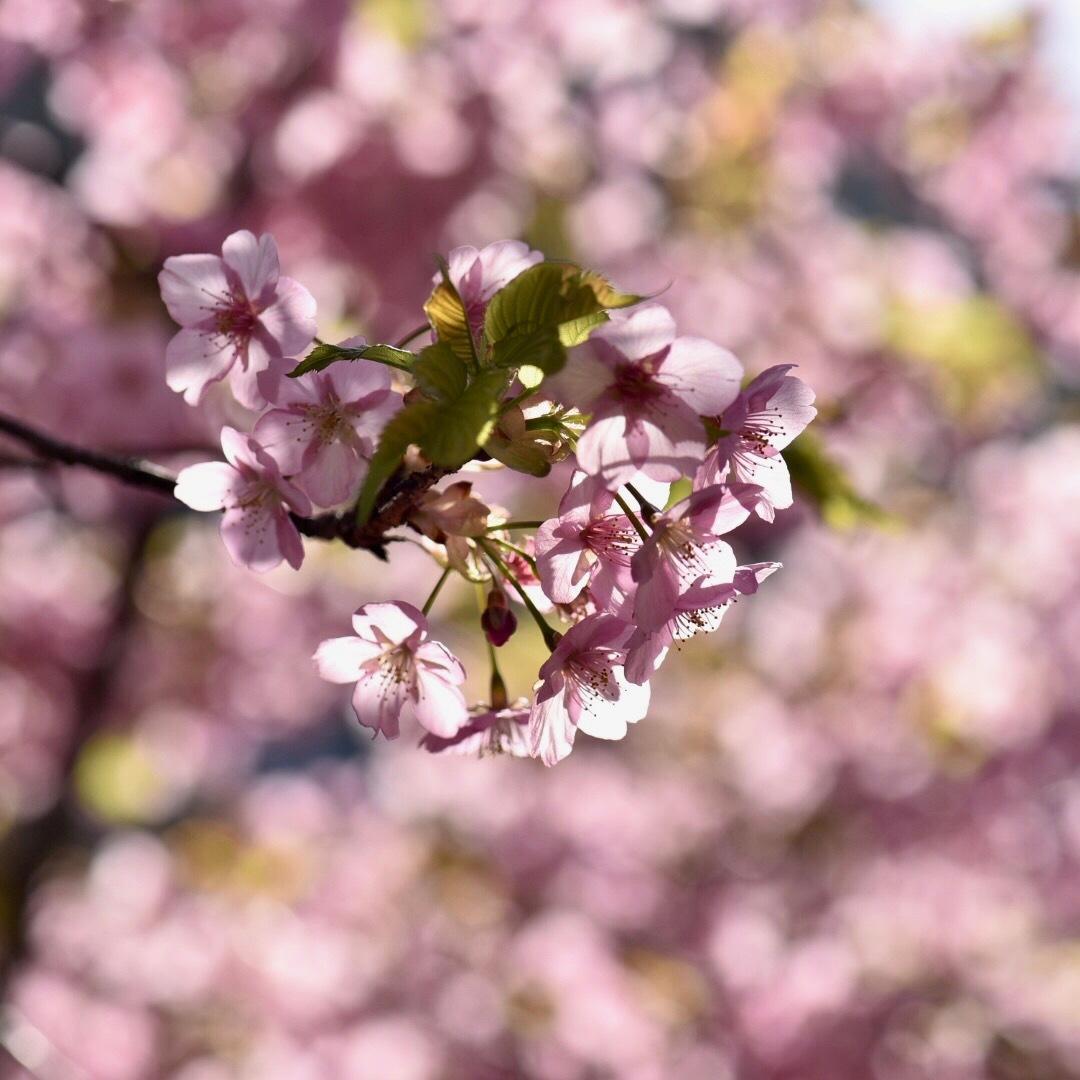 春が来た02_f0099102_20331154.jpg