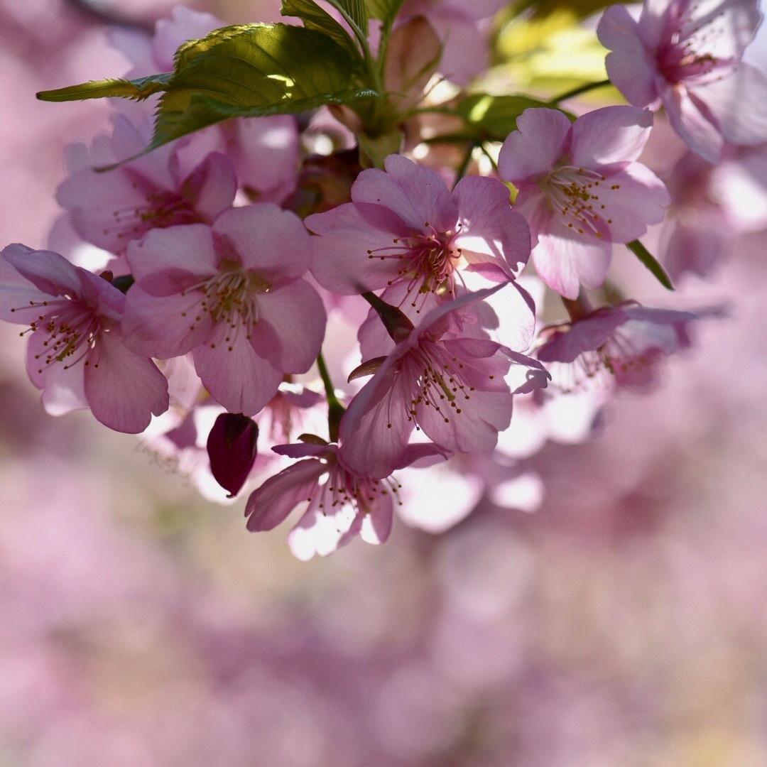 春が来た02_f0099102_20332276.jpg