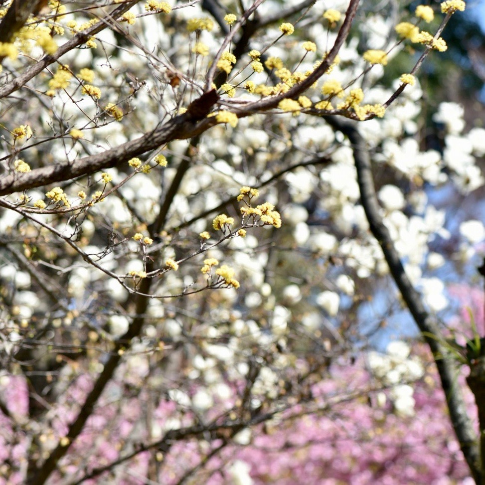 春が来た02_f0099102_20334995.jpg