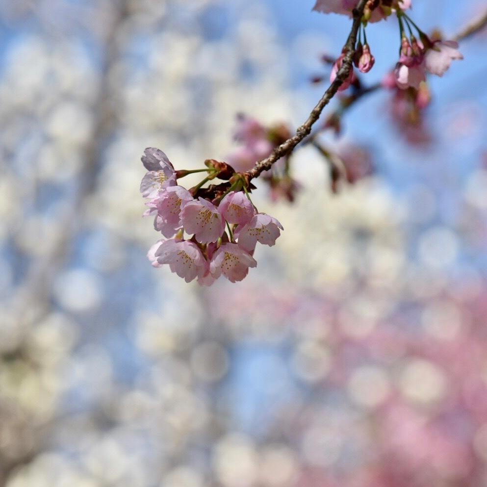 春が来た02_f0099102_20335665.jpg
