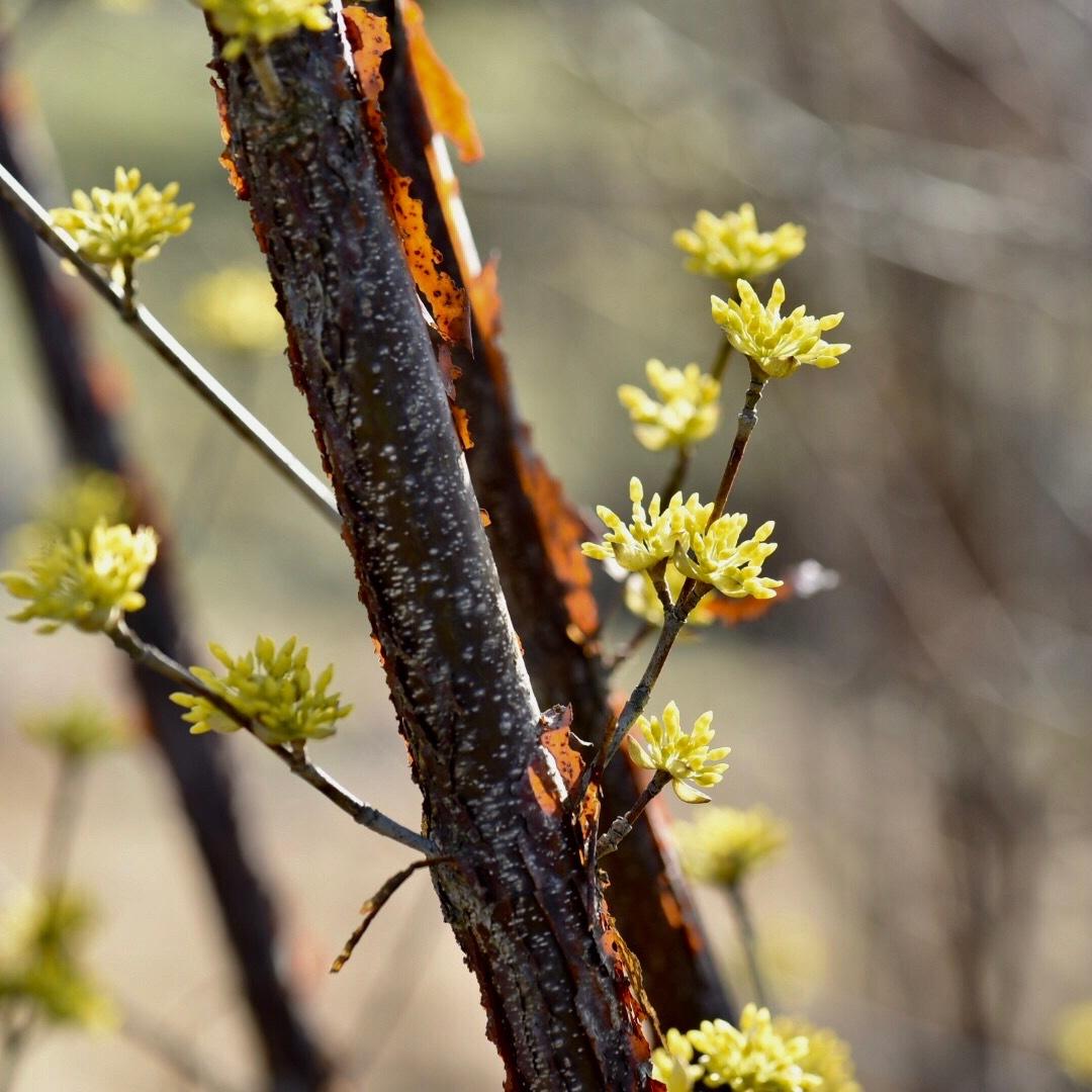 春が来た02_f0099102_20354414.jpg
