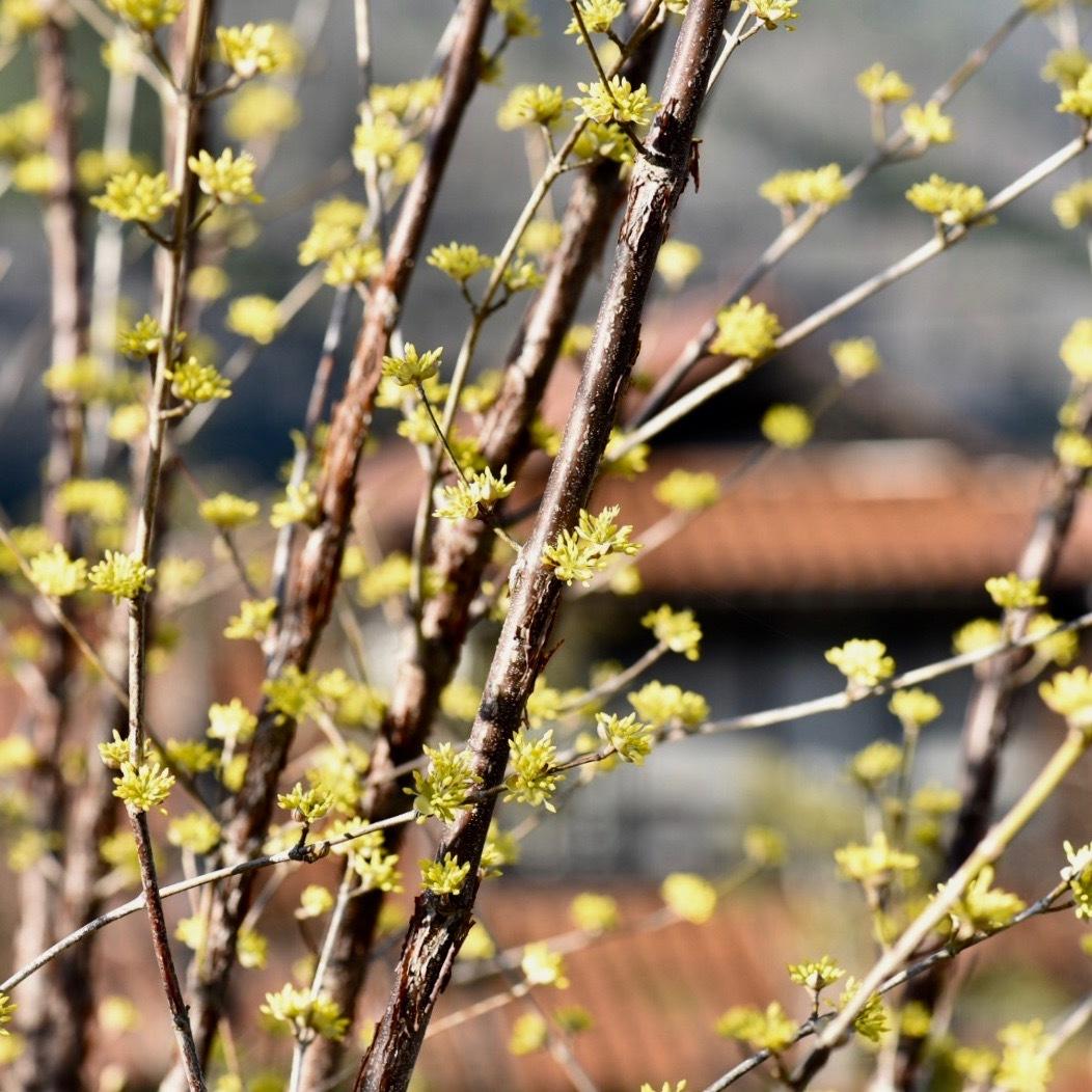春が来た02_f0099102_20361405.jpg