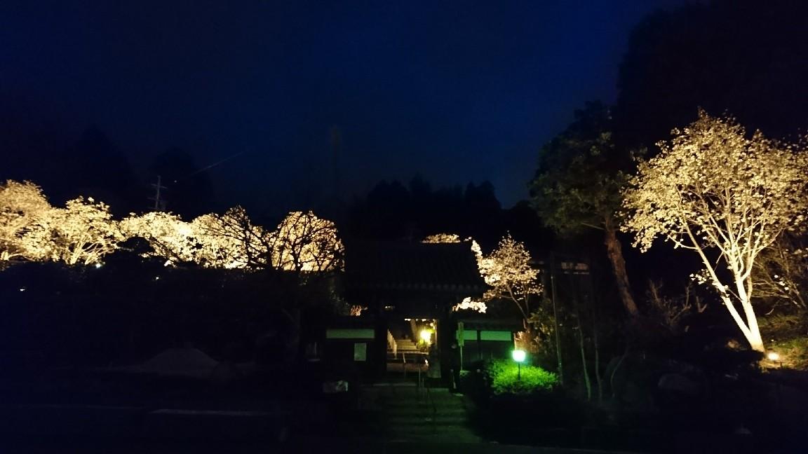 木蓮を見に行く♪_b0093515_23574306.jpg