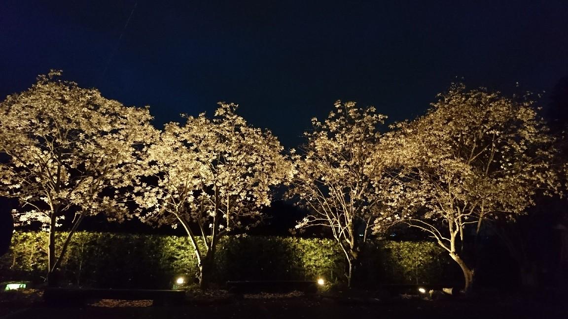 木蓮を見に行く♪_b0093515_23574346.jpg