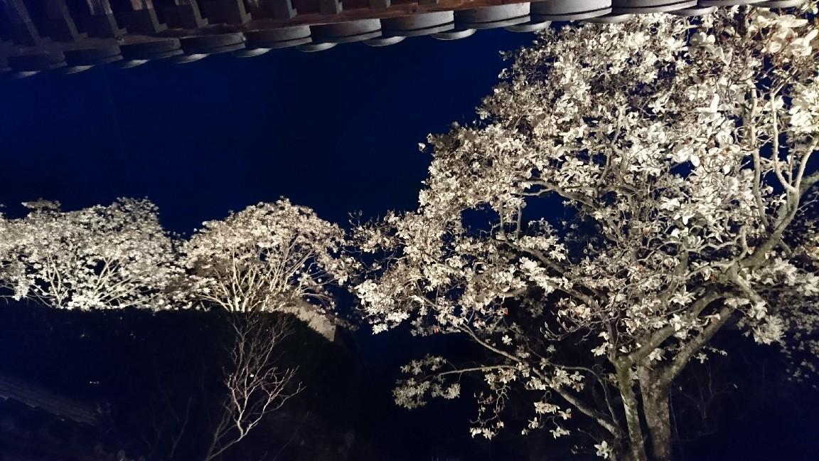 木蓮を見に行く♪_b0093515_23574378.jpg