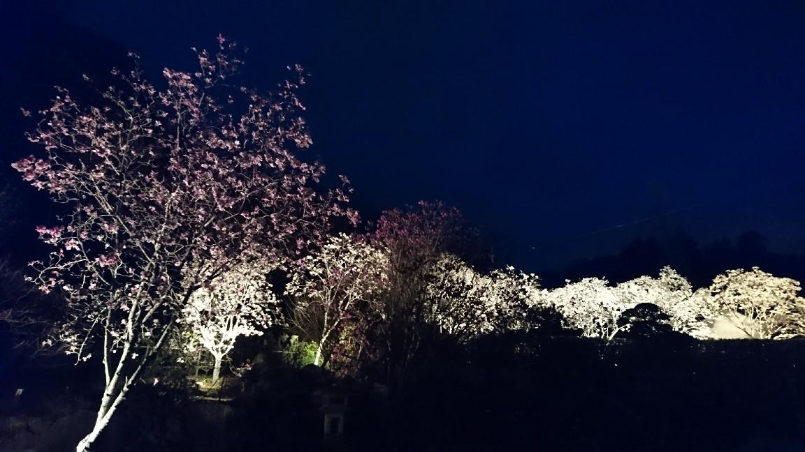 木蓮を見に行く♪_b0093515_23574483.jpg