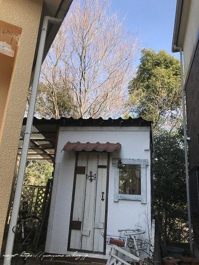 明日3日【NHK首都圏版ニュース】に手作りのDIY小屋が登場&春の庭♪_f0023333_22134348.jpg
